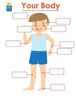 parts   human body worksheet educationcom