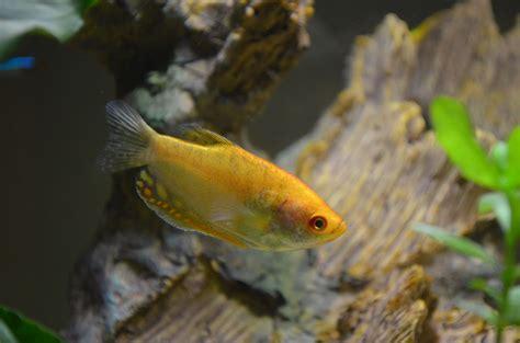 probleme d algues dans l aquarium algues qui font des taches marrons sur les vitre et le filtre