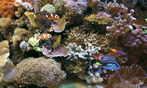un aquarium d eau de mer chez un particulier