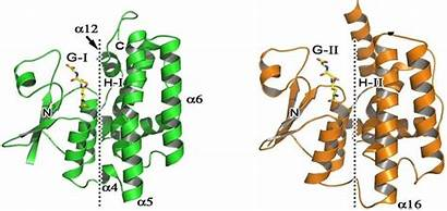Enzyme Activity Transferases Measurement Enzymes Creative Transferase