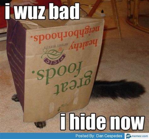 Bad Kitty Meme - bad cat memes com