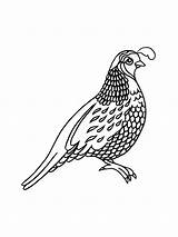 Quail Coloring Pages Printable sketch template