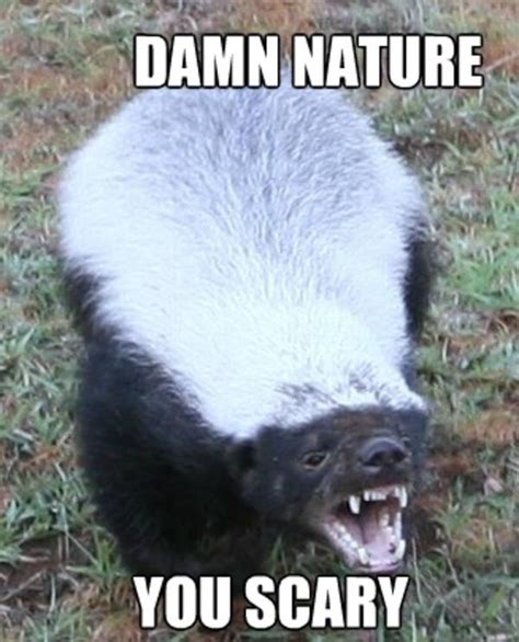 Damn Nature You Scary Meme - image 731381 damn nature you scary know your meme