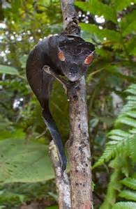 Madagascar Reptiles and Snakes