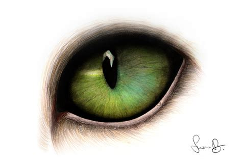 Green Cat Eyes Drawing