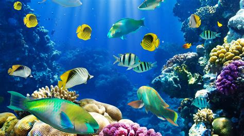ocean fish wallpaper hd pixelstalknet
