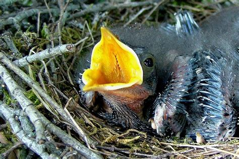 what to feed baby birds without a what to feed a baby bird for the best nutrition