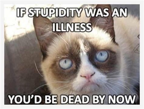 Grumpy Cat Meme - grumpy cat