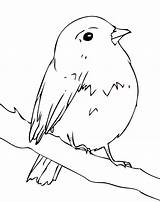 Robin Coloring Pages Bird Birds Simple American sketch template