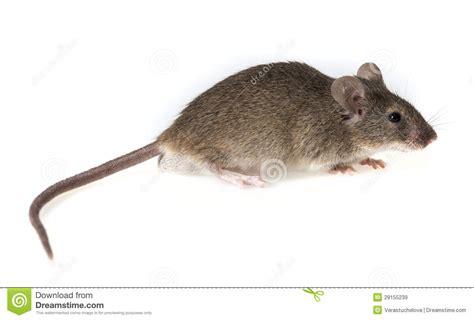 souris dans la maison souris dans la maison excellent souris dans la maison with souris dans la maison avezvous dj
