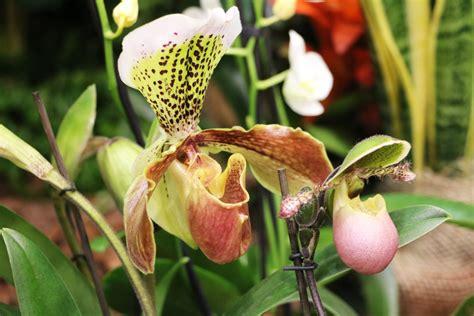 Gartenorchidee Pflanzen Und Pflegen by Welche Gartenorchideen Gibt Es Sorten Und Pflege Infos
