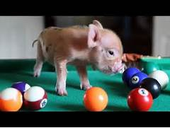 Funny and cute mini pi...