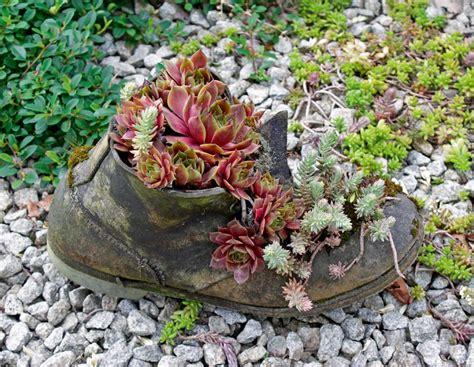Pflanzen Für Den Steingarten dekorative pflanzen f 252 r den steingarten bayerisches