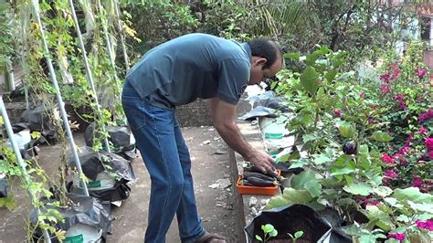 kerala terrace garden pt  youtube