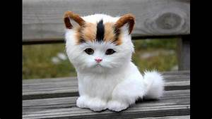 Adorable Cats Compilation - Most Beautiful Cats In The ...