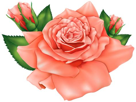 Orange Roses PNG Clipart Image Gallery Yopriceville