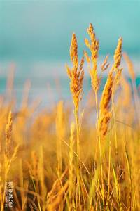 Items similar to Nature photography Vintage summer seaside ...