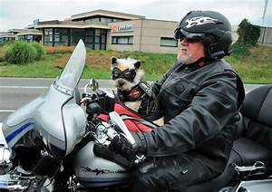 Riding With Your Dog! | The BikeBandit Blog