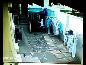 Pitbull kills a thief in Brazil - pit bull mata a un ...