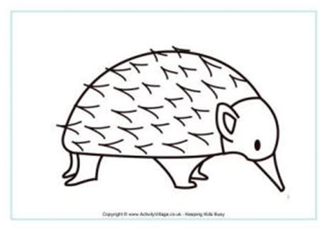 echidna colouring page