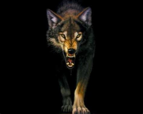Angry Lone Wolf Wallpaper by Xwolfe Dogs Animals Background Wallpapers On Desktop