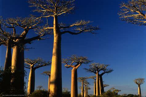 bureau paysage tlcharger fond d 39 ecran nature paysage afrique coucher