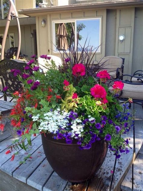 ornamental grasses  containers flowers container flowers container gardening plants