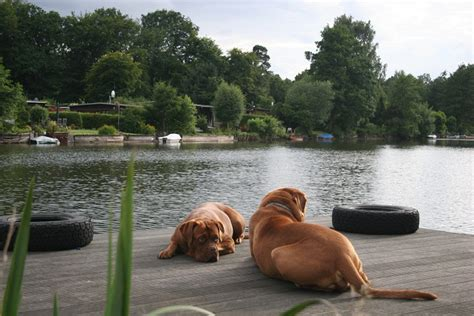 Bordeauxdogge Sucht Couch » Buddy