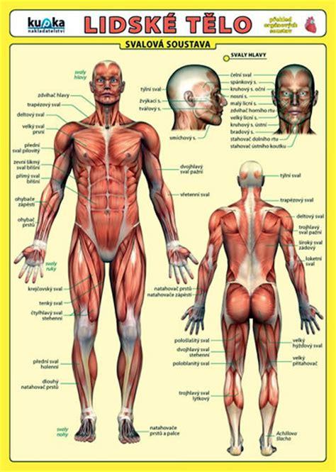 Mapa lidského těla