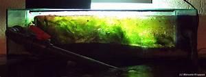 L Form Aquarium : 1000 liter meeresaquaristik ~ Sanjose-hotels-ca.com Haus und Dekorationen