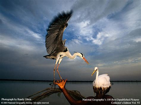 National Geographic Magazine 100 Best Pictures Unpublished Wallpaper Download Pets Wallpapers