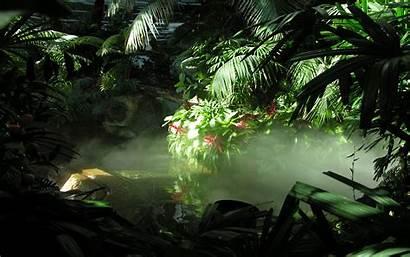Wallpapers Jungle Nature Pixelstalk Wide