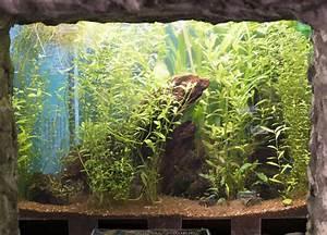 Fish Tank Background Fish0058 Free Background Texture Aquarium Fish Tank