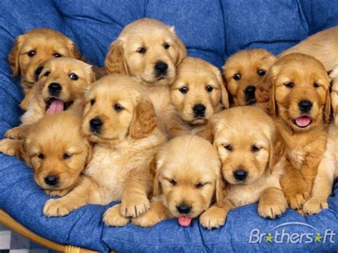 Download Free Cheerful Dogs Screensaver, Cheerful Dogs