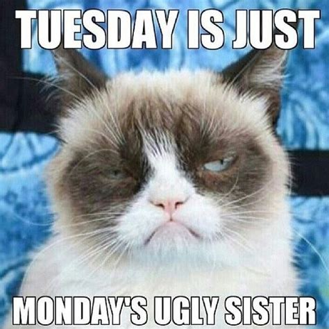 Grumpy Cat Monday Meme - tuesday is just mondays ugly sister funny meme monday humor instagram funny meme tuesday