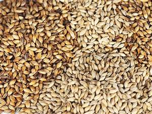A New Sequence Of The Barley Genome Could Open The Taps On