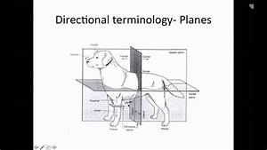Skeletal Anatomy Of Dogs And Cats  Part 1 Of 2