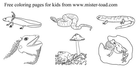 reptiles and hibians coloring pages coloring page
