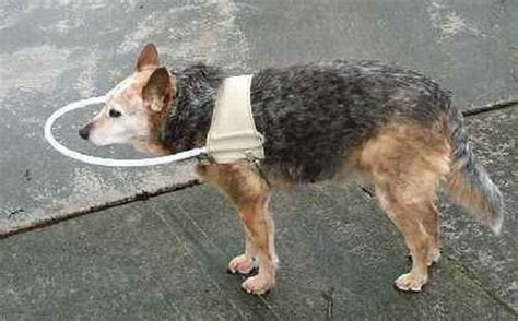 Walking Stick For A Blind Dog