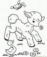 Coloring Sheep Baby Cute Pages Coloringpages101 sketch template