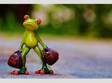 Time To Go Frog Farewell · Free photo on Pixabay