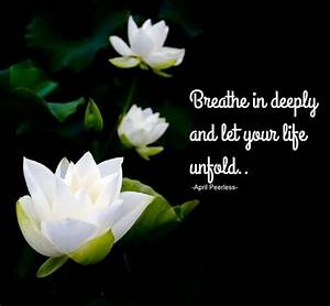 Best 25+ Lotus ... White Water Lily Quotes