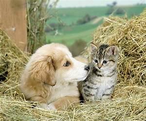 Kitten And Puppy Playing Wallpaper Desktop Background