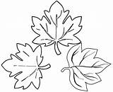 Coloring Leaves Sugar Maple Pages Botanical Create sketch template