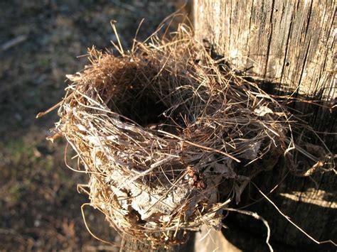 birds nest pics pin by sharon beach on nesting pinterest