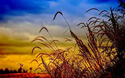 Field Wheat Background Dusk Wallpapers13 Pc Wallpapertag