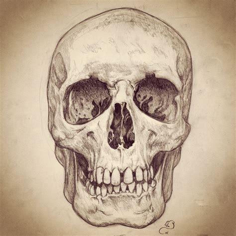 Pencil Sketch Human Skull Art Pinterest