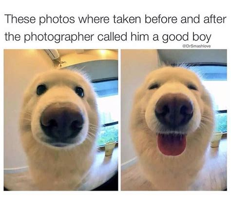 Good Boy Memes - good boy doggy days pinterest boys and animal