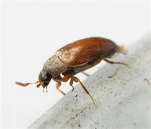 Arten Von Stoffen : insekten in der wohnung und ihre arten was ist wichtig jeden besitzer zu kennen ~ Frokenaadalensverden.com Haus und Dekorationen