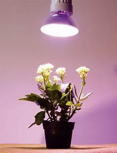 Lampen Für Pflanzen : bilen utmerket mekanisme oktober 2015 ~ A.2002-acura-tl-radio.info Haus und Dekorationen